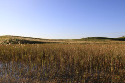 Reedbed_sone